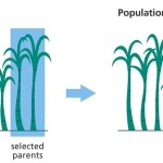 What is the Difference Between Transgenesis and Selective Breeding