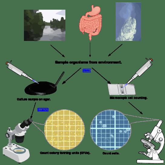 Bioburden vs Endotoxin in Tabular Form