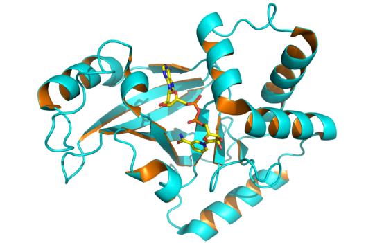 Exoenzyme vs Endoenzyme in Tabular Form
