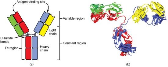 Neutralizing vs Binding Antibodies in Tabular Form