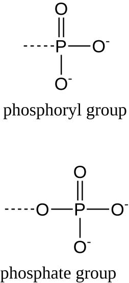 Phosphoryl Group vs Phosphate Group in Tabular Form