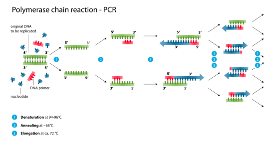 Difference Between Conventional Nested and Real-time PCR Assays