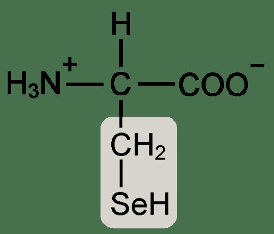 Cysteine vs Selenocysteine in Tabular Form