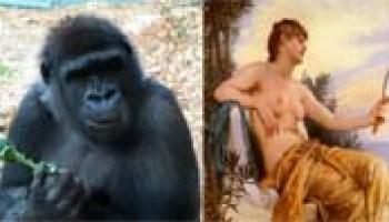 Similarities between humans and animals essay