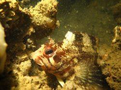 Un poisson observe la plongeuse