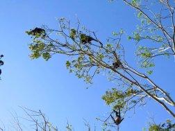 Plusieurs singes se regroupent en haut d'une branche.