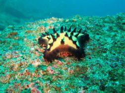 Une étoile de mer posée sur un fond rocheux