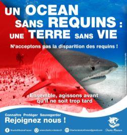 © Fabienne Rossier | Sharks Mission France