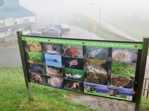 Un panneau d'indication de la faune et la flore de Scharendijk - Zélande - Netherlands