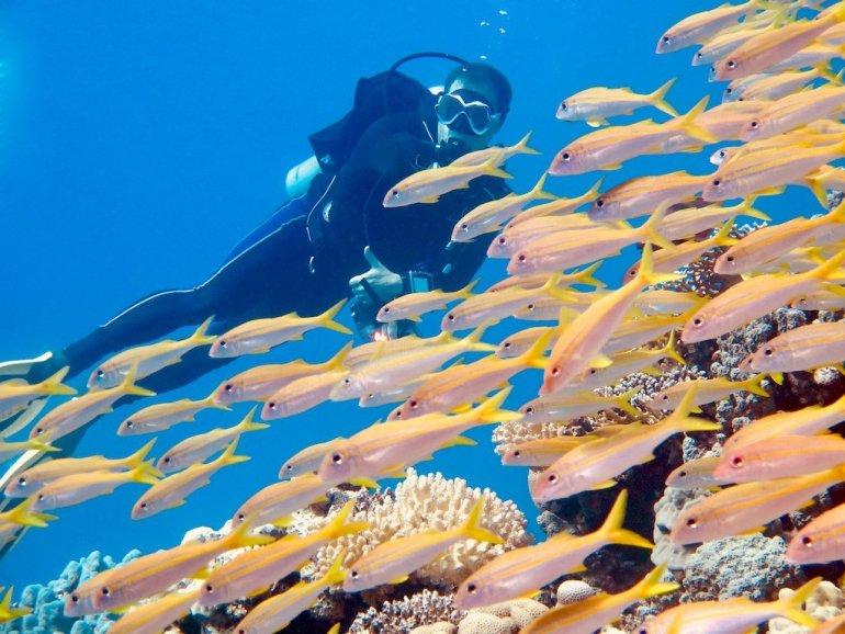 Un plongeur regarde un banc de poissons passer devant lui