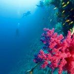 Des plongeurs au loin à Elphinstone