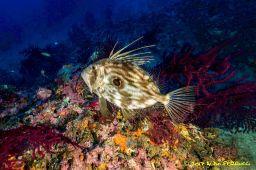 Un poisson évoluant dans les profondeurs