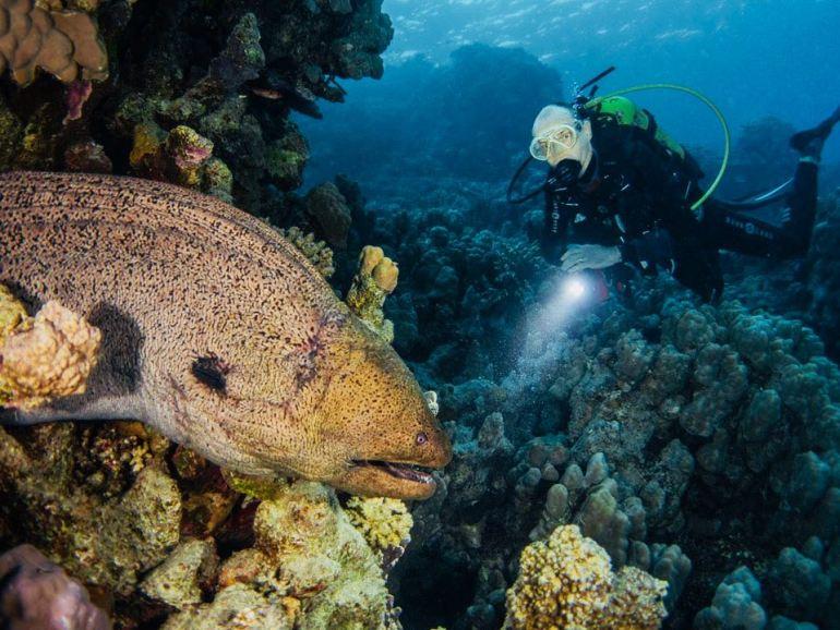 Murène éclairée par un plongeur
