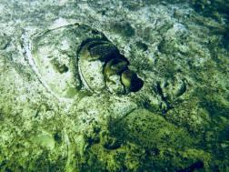 Fossile dans le cénote de Dos Ojos