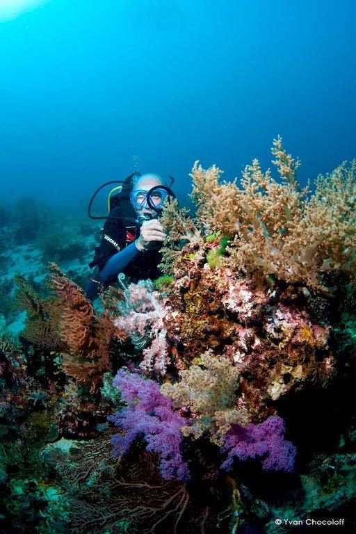 Un plongeur observe la flore des fonds marins aux Philippines