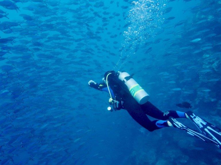 Une plongeuse entre dans un banc de poissons