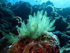 Un paysage sous marin dans les eaux de Mayotte