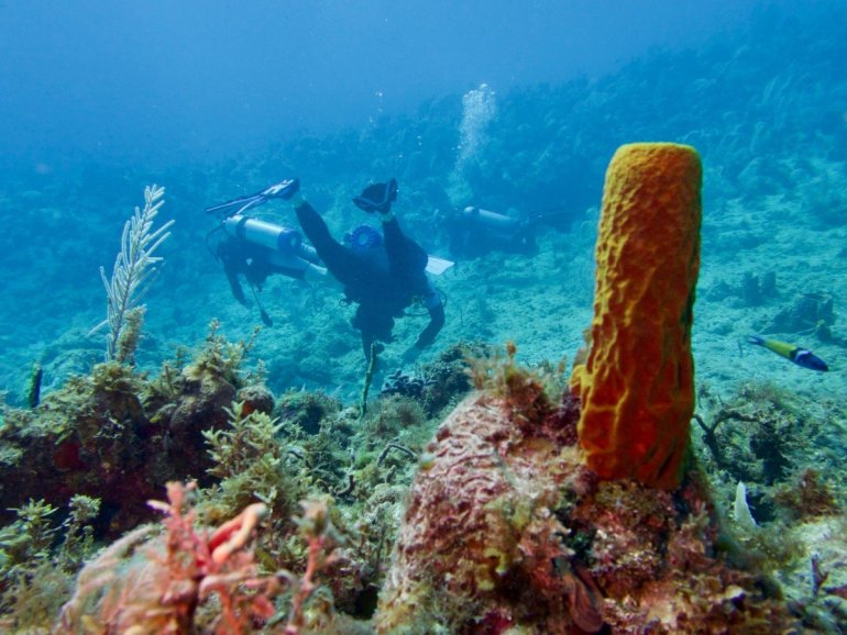 Plongeurs explorant les fonds marins à la recherche d'une belle photo