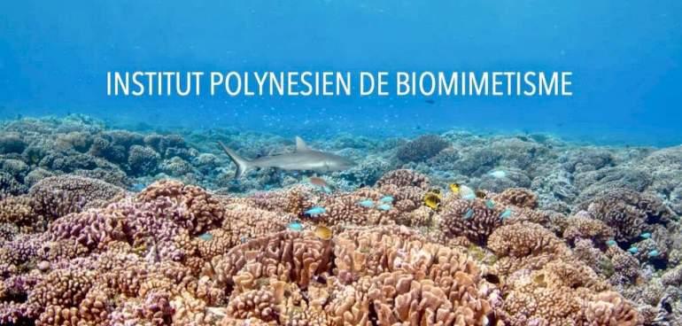 Une affiche représentant le biomimétisme polynésien