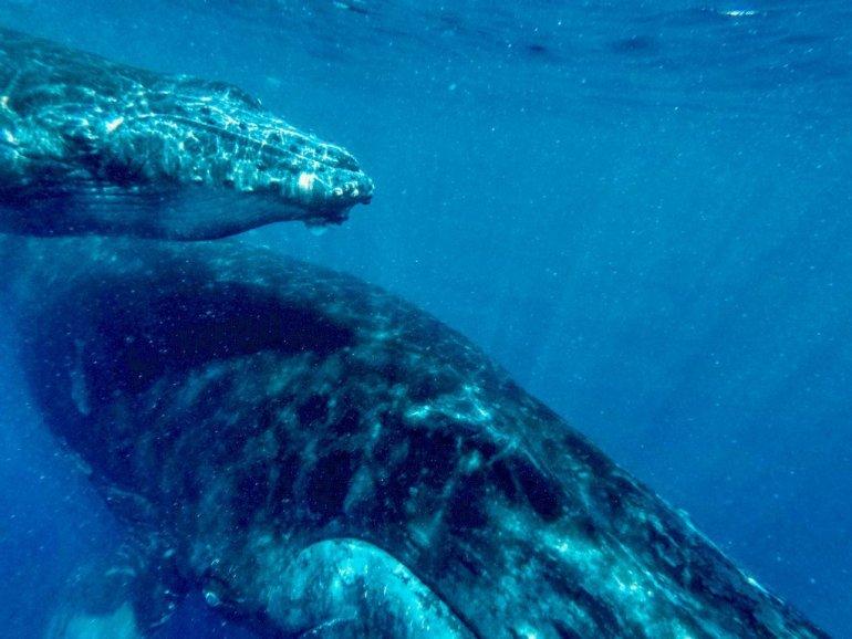 Une baleine et son baleineau