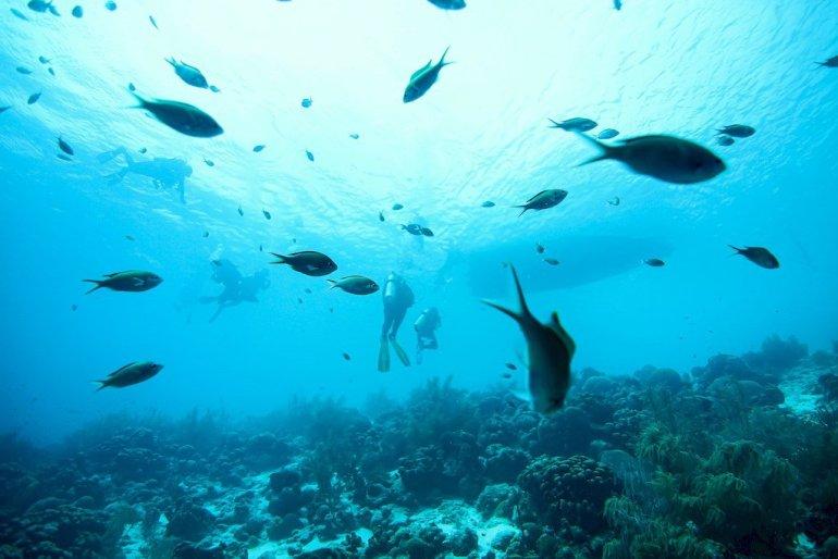 Poissons dans les eaux de Bonaire devant un bateau de plongée