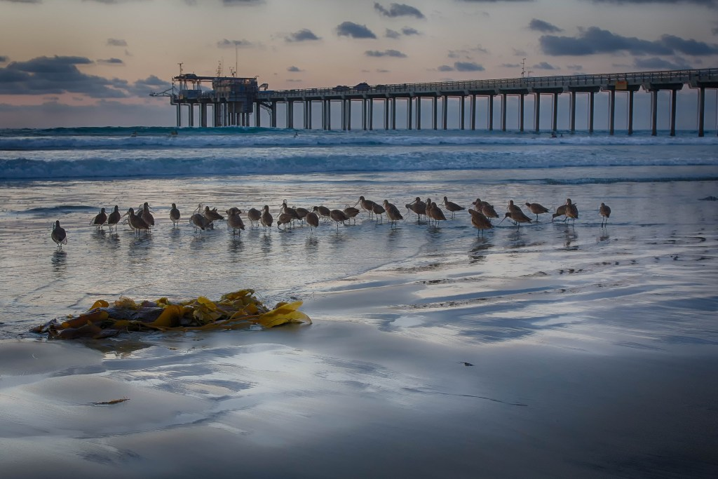 Best Places to Learn to Surf in California
