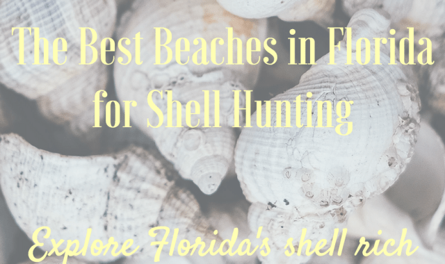 best beaches in florida for shells