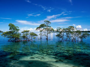 best time to visit Andaman for scuba diving