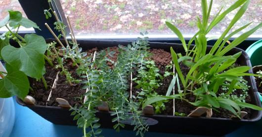 Il regno delle piante