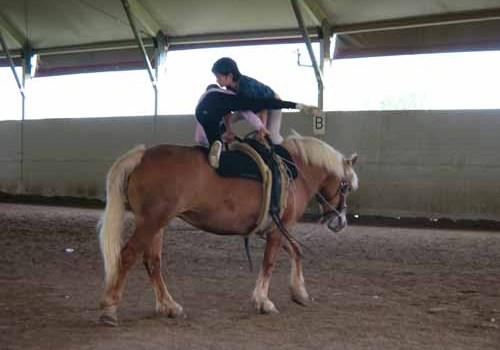 Il cavallo