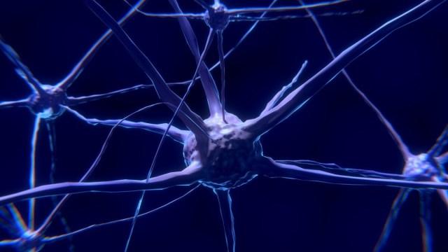 Neuralink neuron