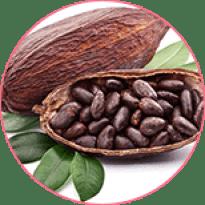 Cocoa seed extract (Theobromine)