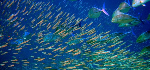 Moofushi Kandu Fish.