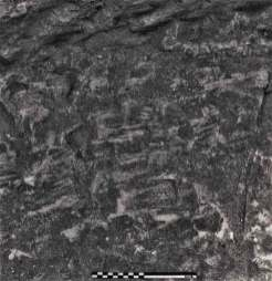 Image 03- Adze marks on the bottom of a pit.