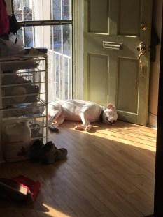 The dog desperately loves his sunshine.