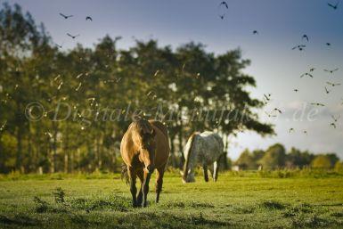 Tierfotograf-113