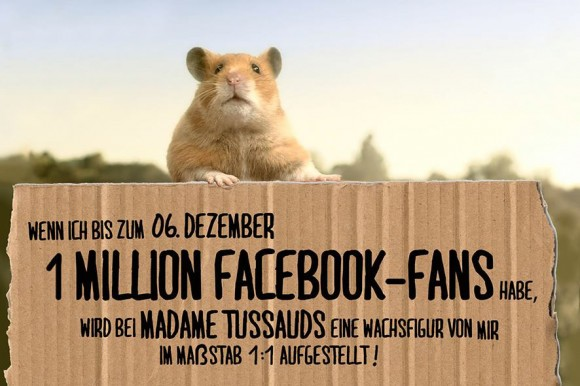 Hamster Hank 1 Mio Fans
