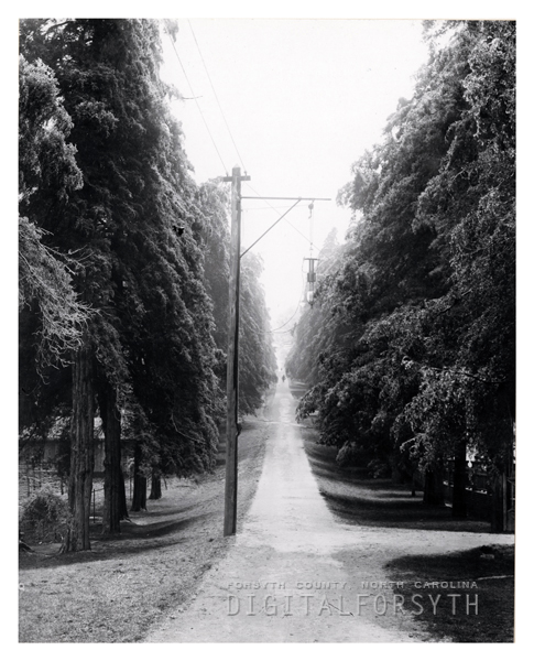 Cedar Avenue in Salem