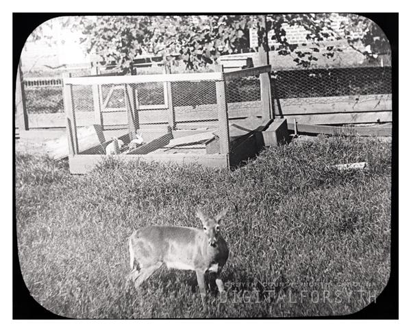 'SFA Deer Yard Salem, NC'