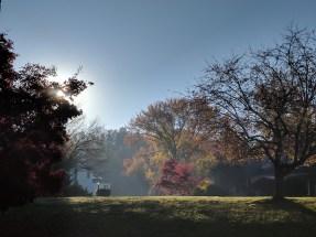 misty-morning-1116