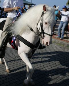 Albino horse with dark eyes and pink skin