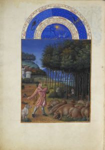 Calendar page for November showing astrological symbols for November at the top, with a pastoral scene of peasants harvesting acorns for pigs grazing beneath the tree.