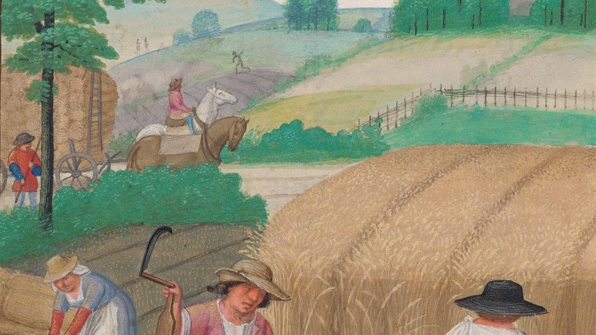 The August calendar image from the Da Costa Hours, Morgan Library showing peasants harvesting wheat