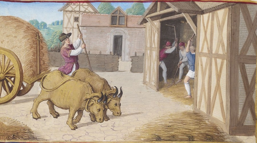 August's labor from the Hours of Henry VIII showing men threshing the grain in a barn, with another man and two oxen bring a cart of grain to be threshed