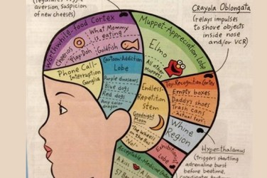 inside a toddlers brain