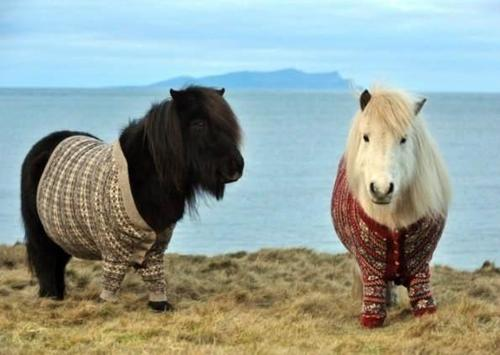 Ponies in Sweaters – YES!