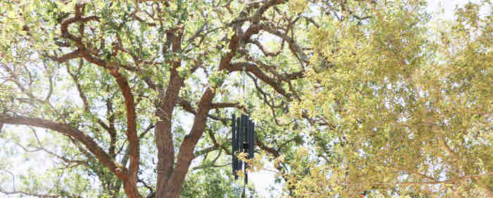 windchime in trees