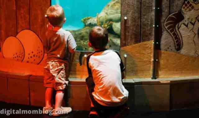 looking at sea turtles