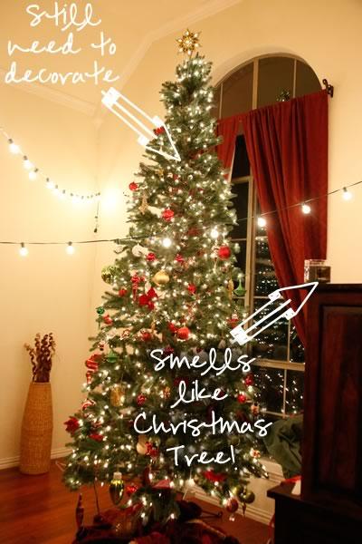 Christmas Tree too tall