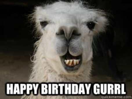 birthday meme llama